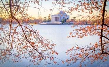 Cherry Blossoms 2014 Washington DC 10