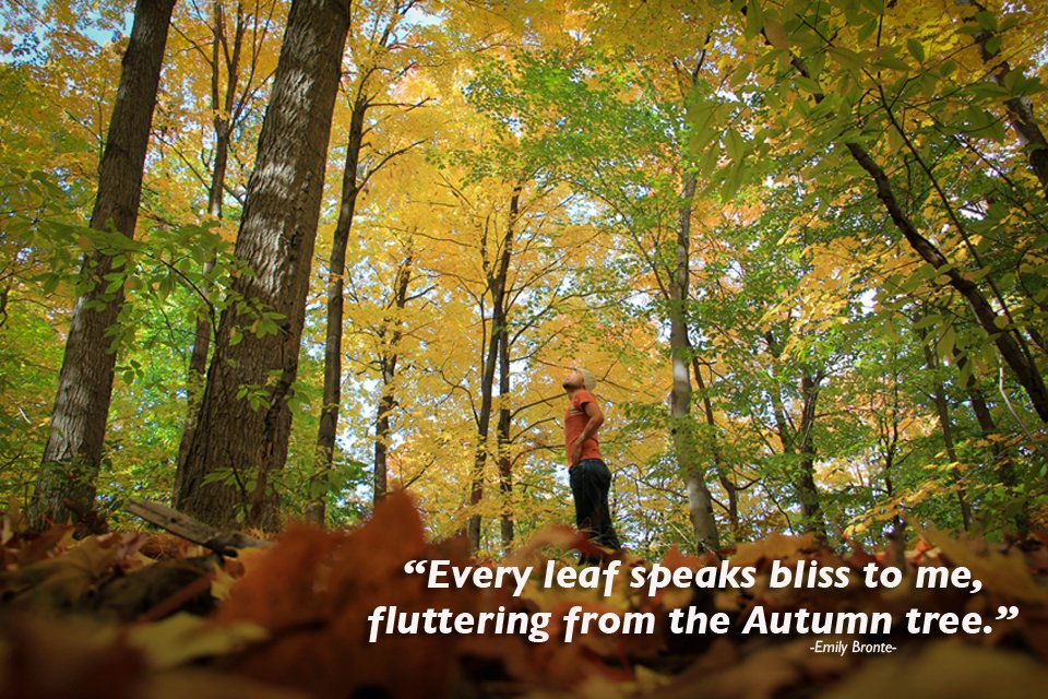Appreciating fall days: 4 quotes honoring autumn - Elements of ...