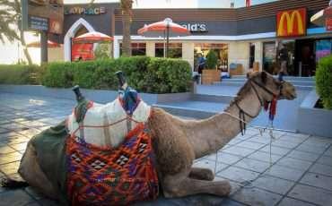 Camel McDonalds
