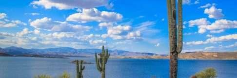 Cactus Arizona Photos Phoenix 9
