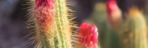 Desert Botanical Garden Phoenix Kinds of Cactus 2