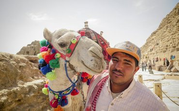 Camels Pyramids of Giza Egypt Cairo