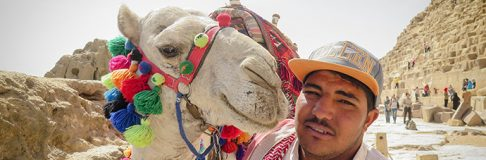 Camels Pyramids of Giza Egypt Cairo