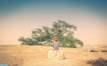 Tree of Life Bahrain Garden of Eden 10