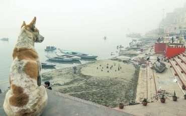 Dog at Varanasi