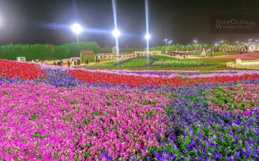 Yanbu Flower Festival 13