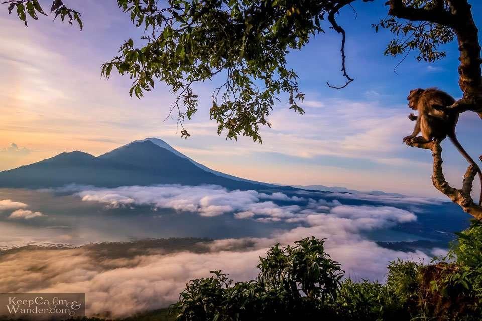 Monkeys Mount Batur