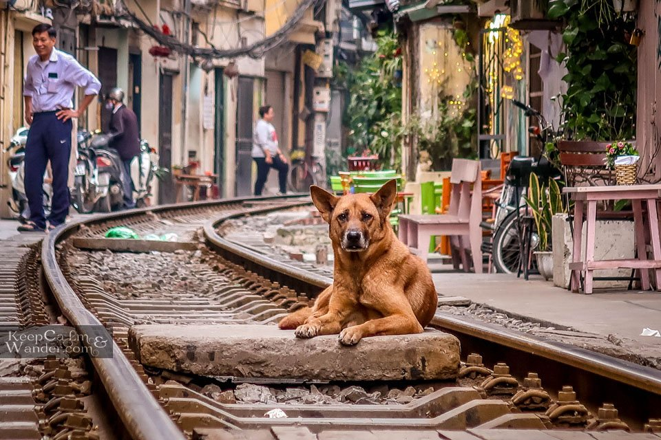 dog on the rail track