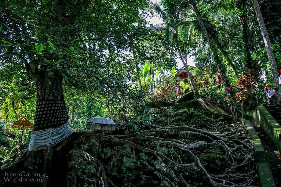 Day trip Bali Ubud Canggu Seminyak Kuta