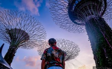Gardens by the Bay Singapore Super Treetop 1