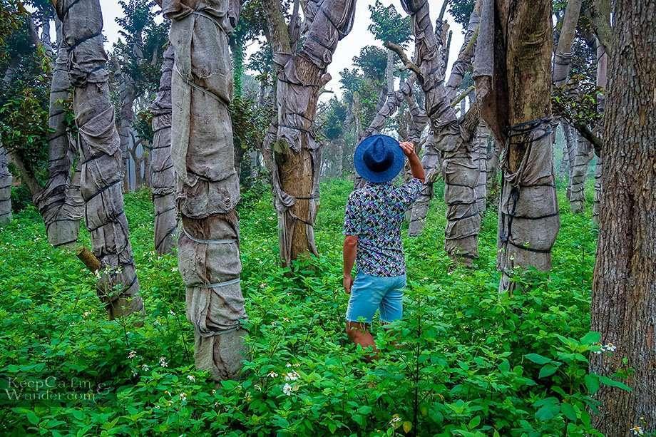 Ba Vi National Park - A Day Trip from Hanoi Vietnam