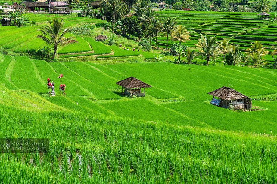 Jatiluwih Rice Terraces is a UNESCO World Heritage Site for its Cultural Landscape (Bali, Indonesia).