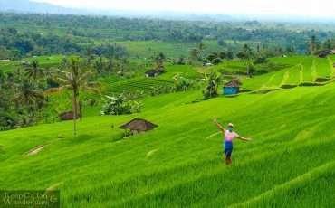 Jatiluwih Rice Terraces Bali 5